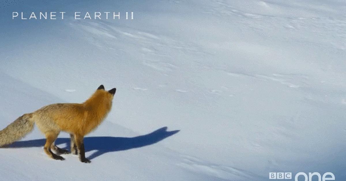 Гифка лиса прыгает, день