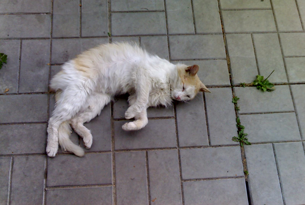 У нас кот привели котенка