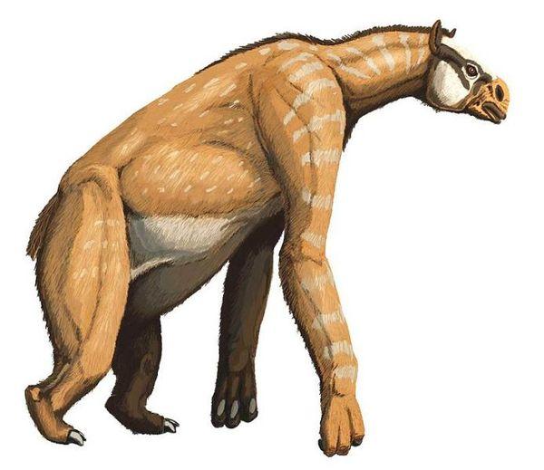 Халикотерий — полулошадь-полуленивец Млекопитающие, Кайнозой, Палеонтология, Наука, Биология, Длиннопост