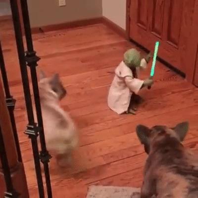 Йода сражается за свою жизнь