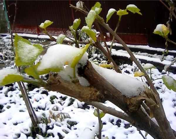Зима. Краснодар