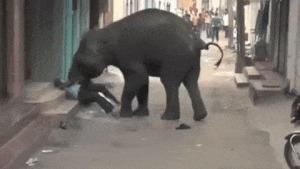 Взбешенный слон