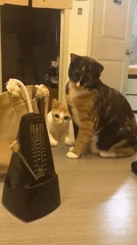 Кот против метронома