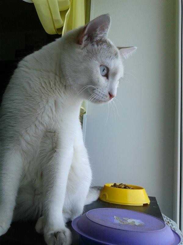 Котенка подобрали.... кот, потеряшка