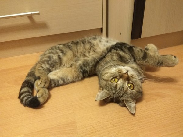 Котасана кот, йога, Фото, удобно
