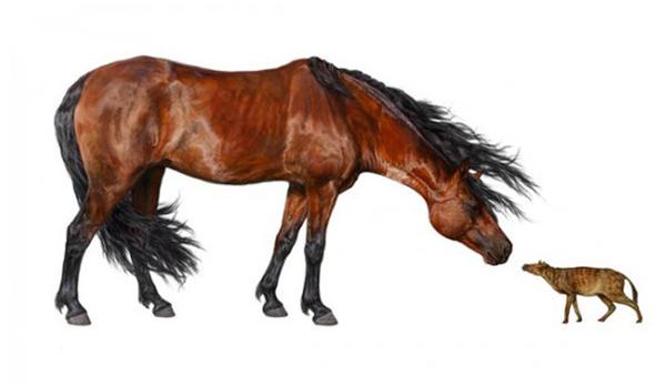 Как лошади потеряли пальцы и выросли в размерах Лошади, Палеонтология, Эволюция, Наука, Животные, Кайнозой, Длиннопост