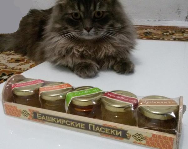 Коту можно мед