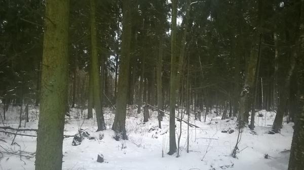 Как прекрасен лес зимой, или то чувство когда ты не из городских Лес, Зима, Холодно, Подкинь дровишек в печку