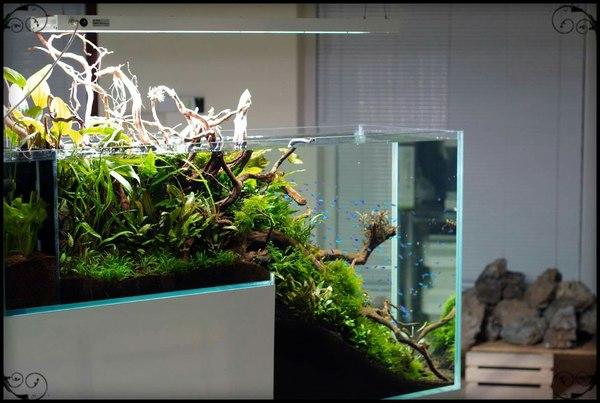 Нестандартный аквариум Аквариумистика, Акваскейп, Перепад глубины, Нестандарт, Длиннопост