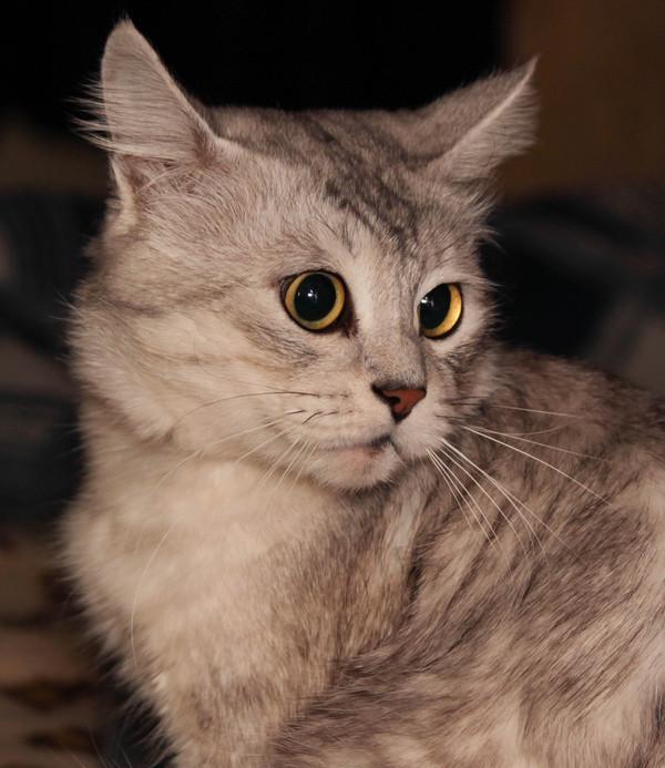 """То чувство, когда испытываешь новый объектив, а у тебя упорно получается """"демонический"""" кот Фото, Кот, Учусь, Кривые руки, Canon 600D, Сanon EF-S 55-250"""