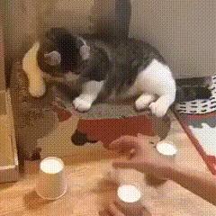 Котейка - молодец!