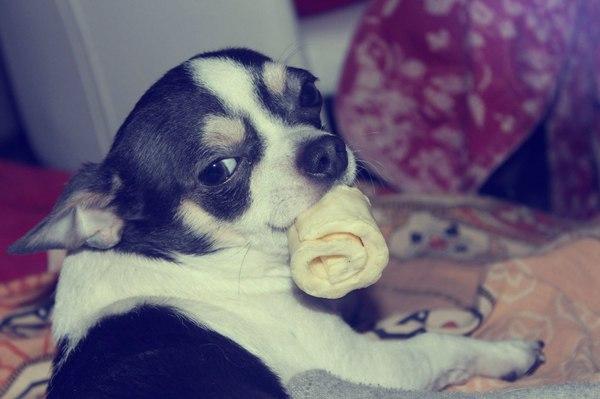 Милость) Собака, радость, Любимец