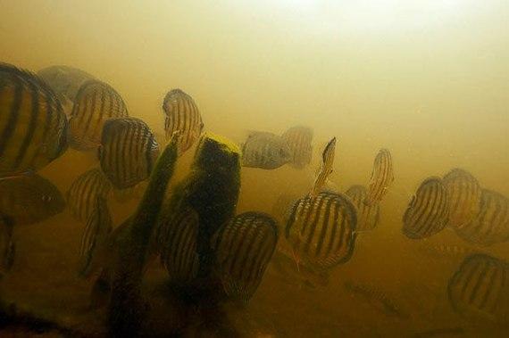 Подводные пейзажи Бразилии (Часть 2) подводная съемка, Бразилия, Рыба, Фото, Природа, длиннопост