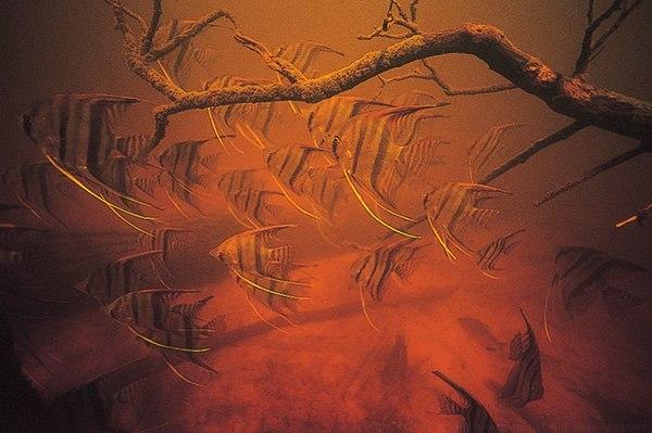 Подводные пейзажи Бразилии (Часть 3) Природа, Бразилия, подводная съемка, Рыба, Фото, длиннопост