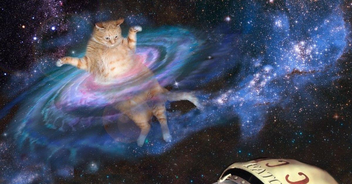 картинки на рабочий стол коты в космосе картинки тегом торт