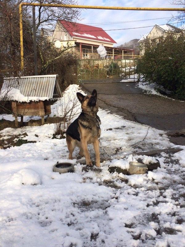 Решил поиграть в снежки с собакой. Собака, Снежки, игра в снежки, зима, длиннопост