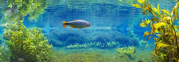 Подводные пейзажи Бразилии (Часть 4) подводная съемка, Рыба, Бразилия, Фото, Природа, длиннопост