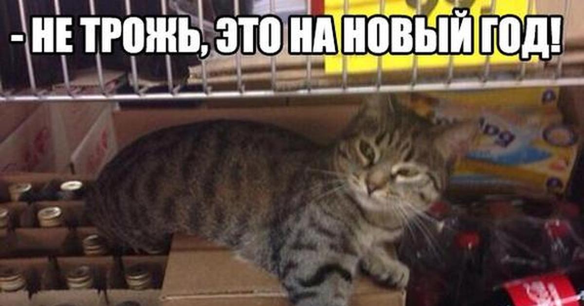 актуальная информация не трогай это на новый год картинки с котами производят китае