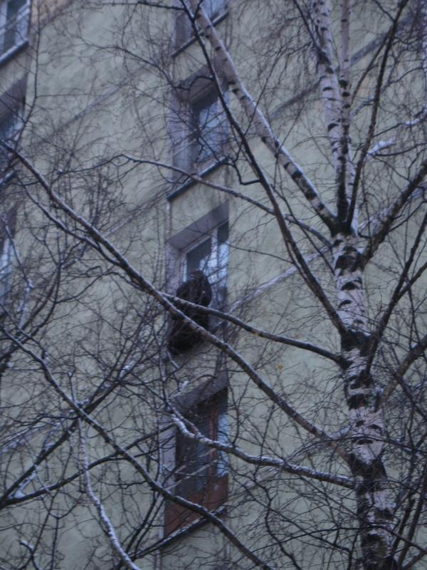 Российские жильцы уже вывесили украшения на окно Пальто, Противогаз, Гп-5, Шапка, Дом, Москва, Снорк, Повесился