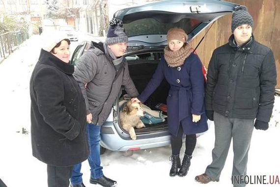 Нашлись хозяева собак, которые 2 дня спасали друг друга на рельсах . верность, собака