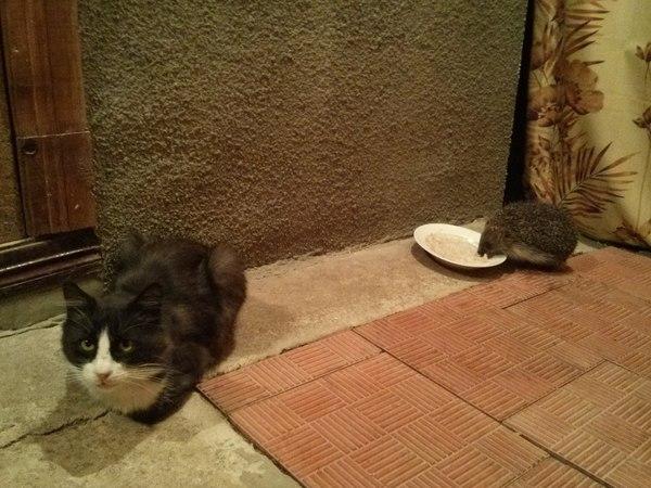 Отжали еду кот, Ёжик, еда, обида, возмущён, осознание