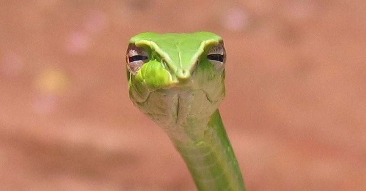 Привет змея смешные картинки