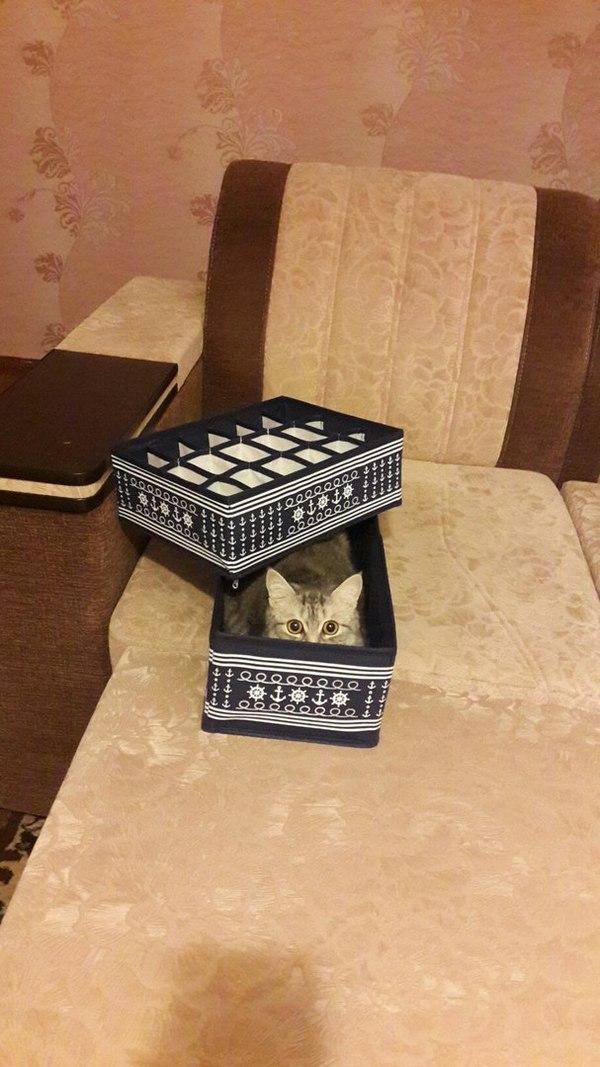 Когда решил сложить свои носки в коробки , а тебе не дают... Кот, Вещи, Вредина, Длиннопост