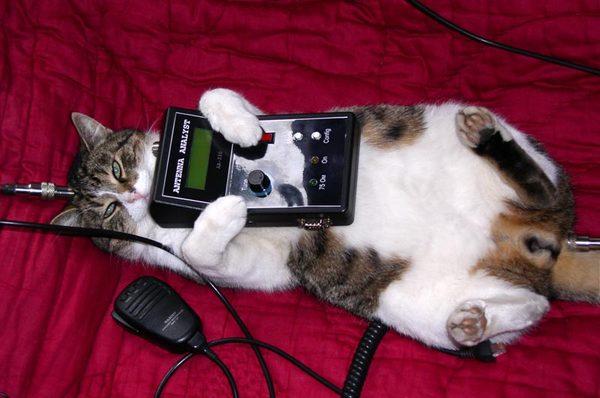 С новым Годом Радиолюбители!!!!! радио, радиолюбители, хобби, кот