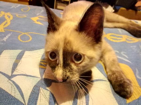 Если у вас борзая кошка кот, ёлка