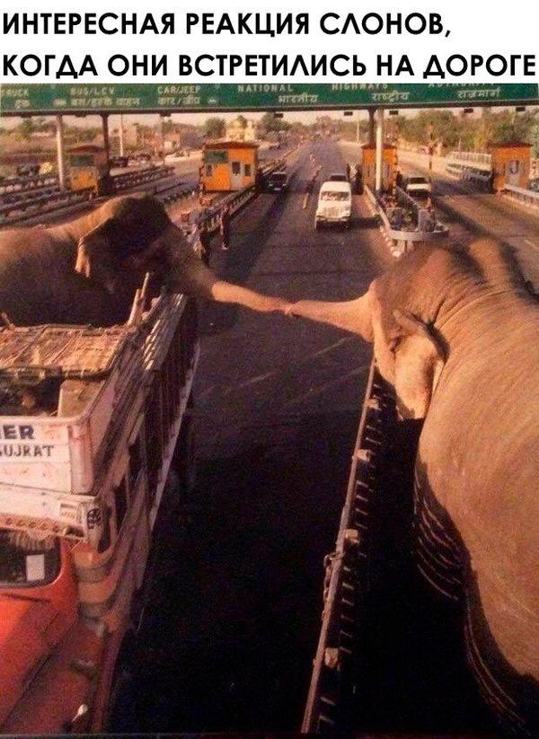Встреча слонов.