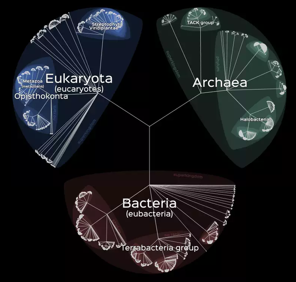 Интерактивное Древо Жизни Lifemap: все живые существа на одной схеме Биология, Наука, Интерактив, Текст