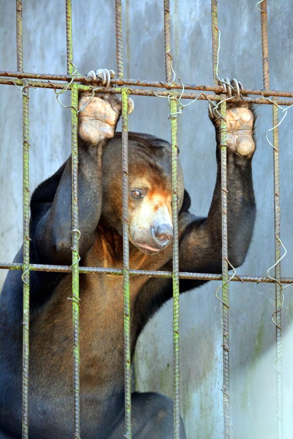 У зверей в зоопарках всегда потухшие глаза. Зоопарк, Животные, Грусть, Клетка, Длиннопост