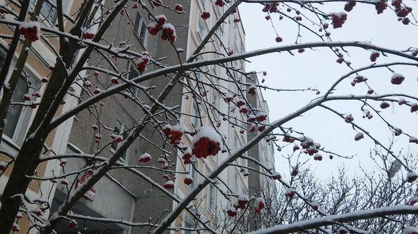 Вот такая красота у меня под подъездом) зима, Снег, рябина, красотиша, Фото, моё