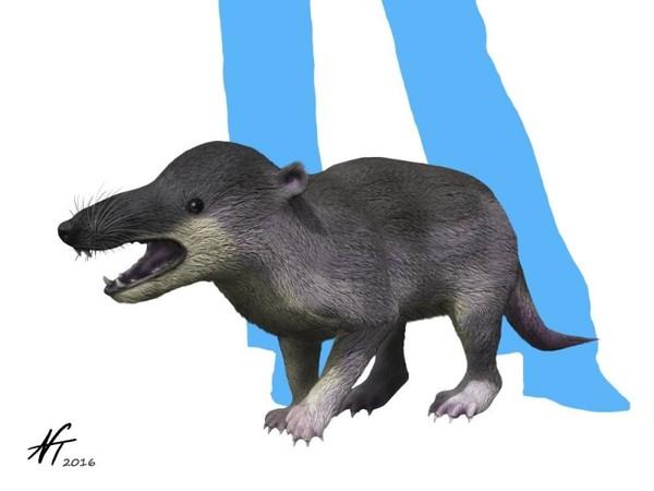 Гигантские древние ежи не имели иголок и были хищниками палеонтология, Ёжик, млекопитающие, кайнозой, длиннопост, биология, наука