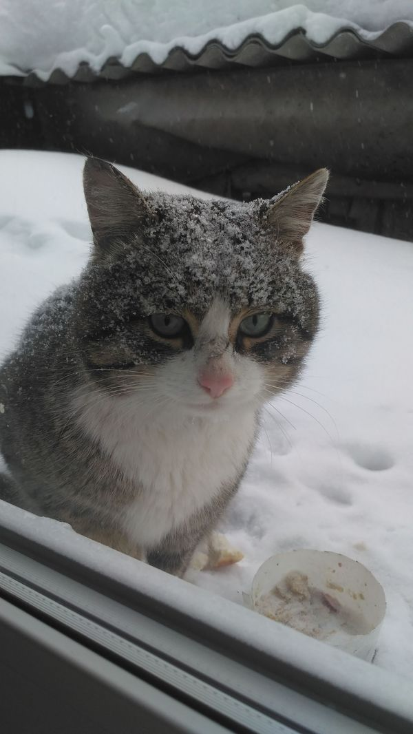 Прикормленный соседский кот