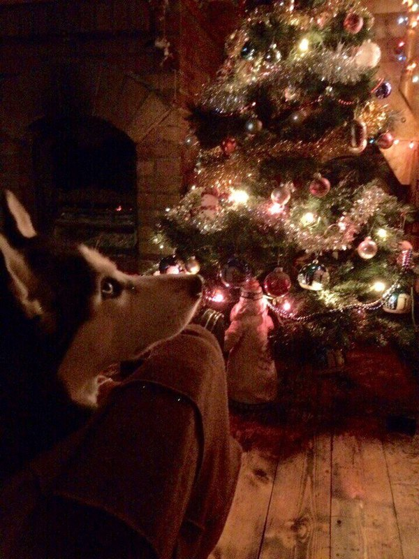 Рождественский пес Собака, Ёлка, Праздники