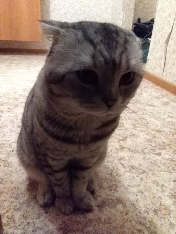 Кот, просто кот. Кот, Фотография