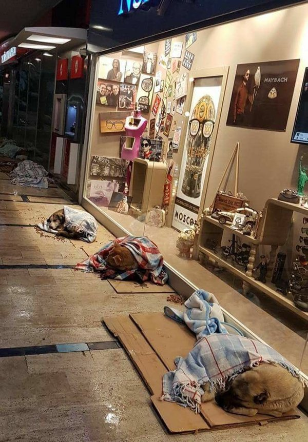 Местные  жители  укрыли  бездомных  собак  пледами , Стамбул .