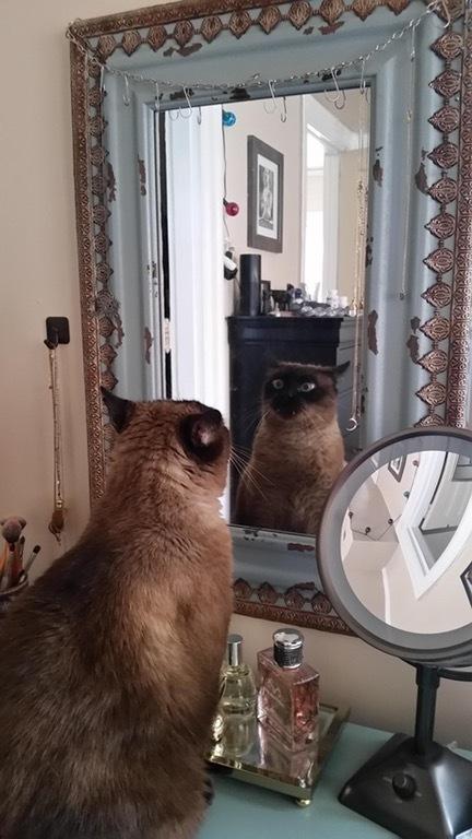 Похоже, мой кот кое-что осознал
