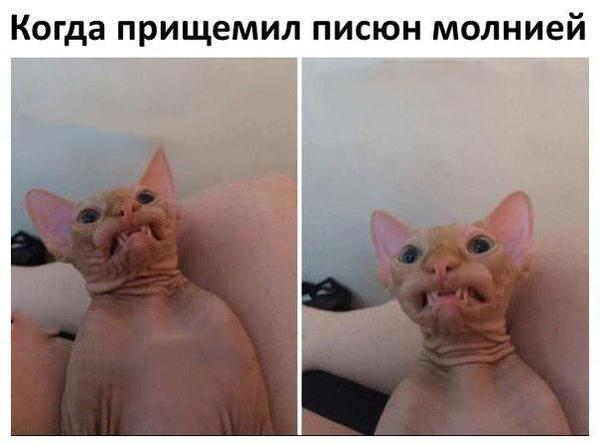 С*ка, до слёз Ржака, Член, Кот, Молния