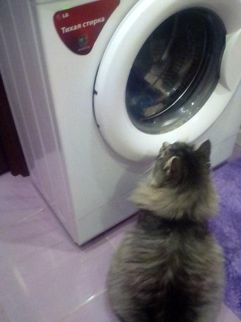 Кошачий телевизор или как сломался мой кот) коты захватят мир, кот, каникулы, в мире животных, животные, домашние животные