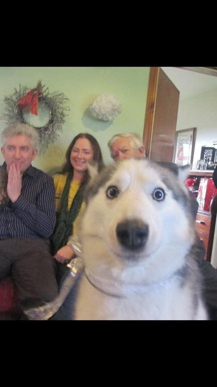 """Делали семейное фото, собака """"запрыгнула"""" в кадр"""