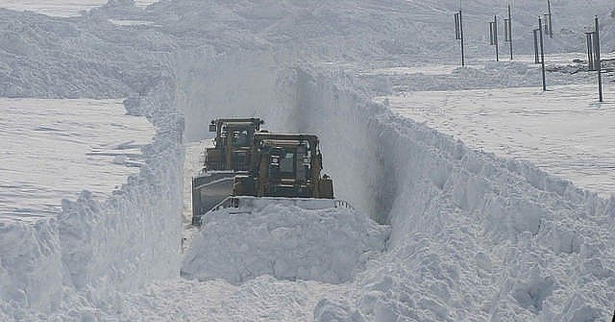 снегом замело картинки прикольные них