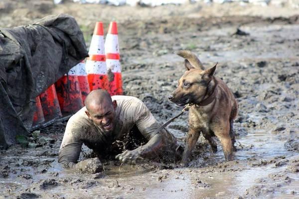 Грязная работенка Собака, собаки на войне, служебные собаки, соревнования