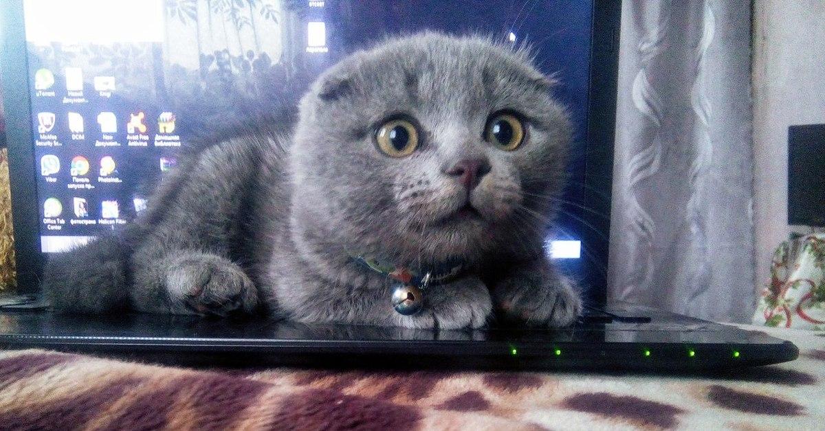 3д кот на рабочий стол
