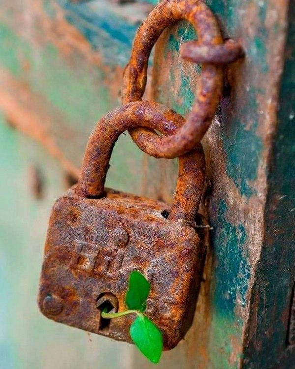 """""""Ключ"""" Замок, Ключи, Росток, Природа"""