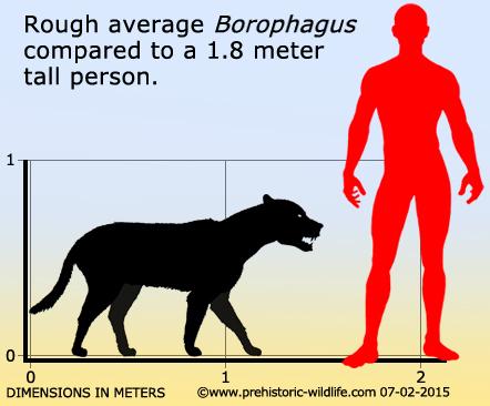 О эволюции хищных. Костедробящие собаки. Палеонтология, Вымершие, Собака, Псовые, Кайнозой, Длиннопост