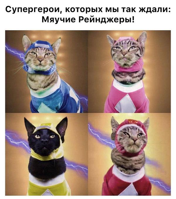 Мяучие рейнджеры Юмор, Power rangers, Кот