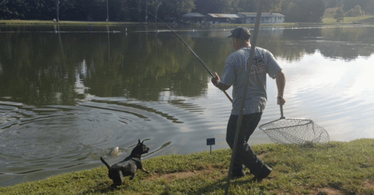 гифы рыбак стоимость исходного сырья