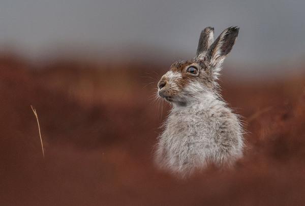Победители конкурса фотографий дикой природы 2016. Фотография, Фотоконкурс, Дикая природа, Победители2016, Длиннопост